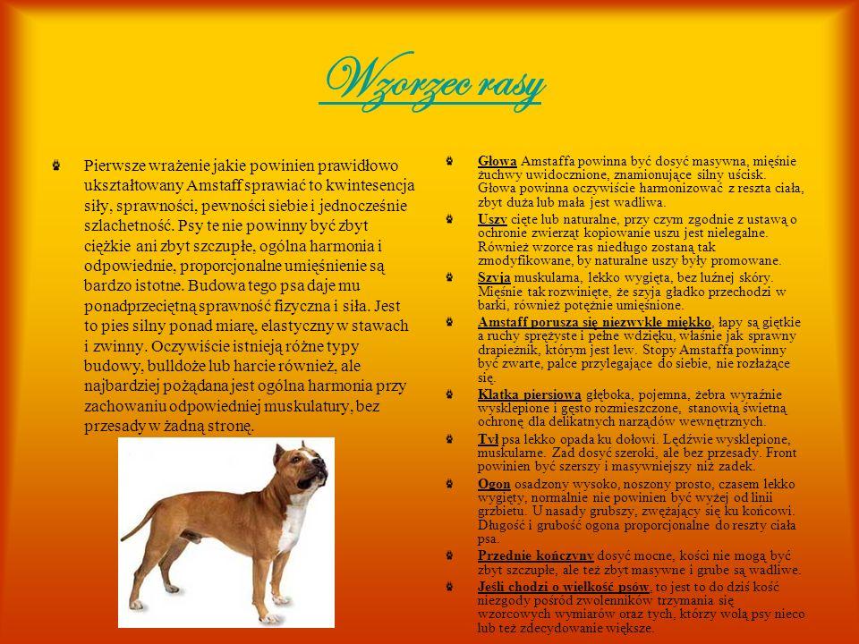 Zachowanie Pomimo swojego wyglądu, budzącego respekt w oczach niejednego przechodnia, Amstaffy nie są psami agresywnymi, o ile tylko pochodzą od rozsądnego hodowcy, zaś właściciel dba o prawidłowy rozwój psychiczny zwierzęcia.