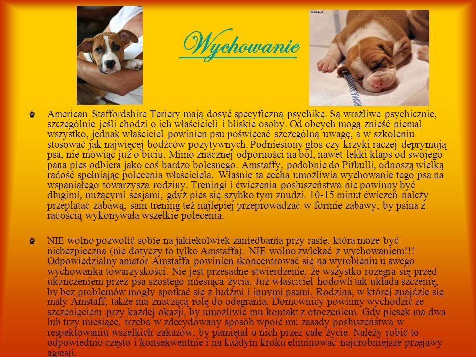 Wychowanie American Staffordshire Teriery mają dosyć specyficzną psychikę. Są wrażliwe psychicznie, szczególnie jeśli chodzi o ich właścicieli i blisk