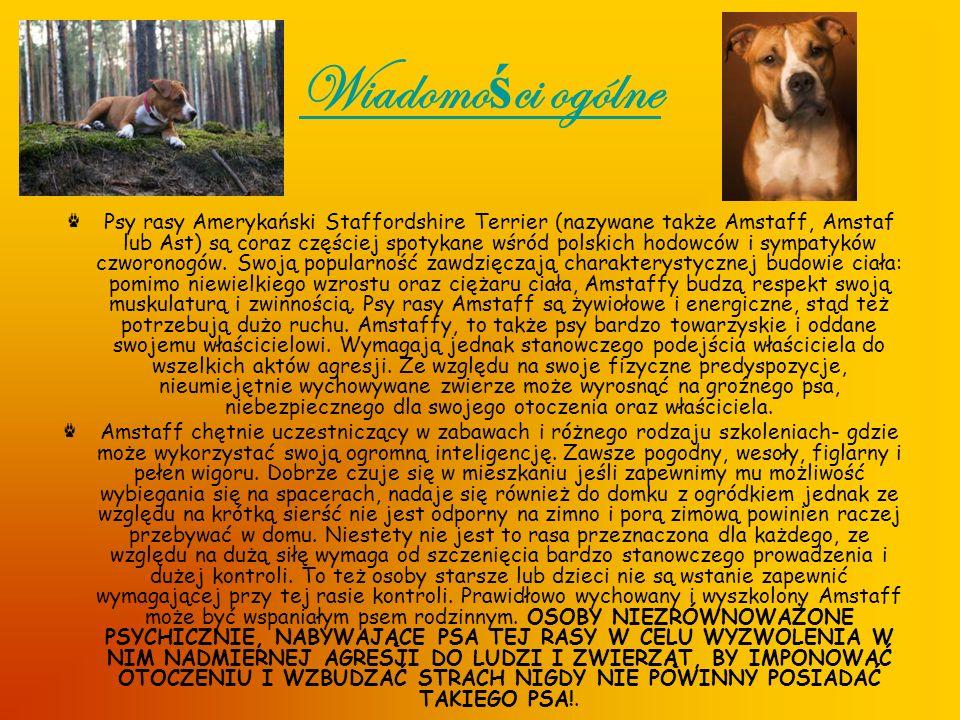 Wiadomo ś ci ogólne Psy rasy Amerykański Staffordshire Terrier (nazywane także Amstaff, Amstaf lub Ast) są coraz częściej spotykane wśród polskich hod
