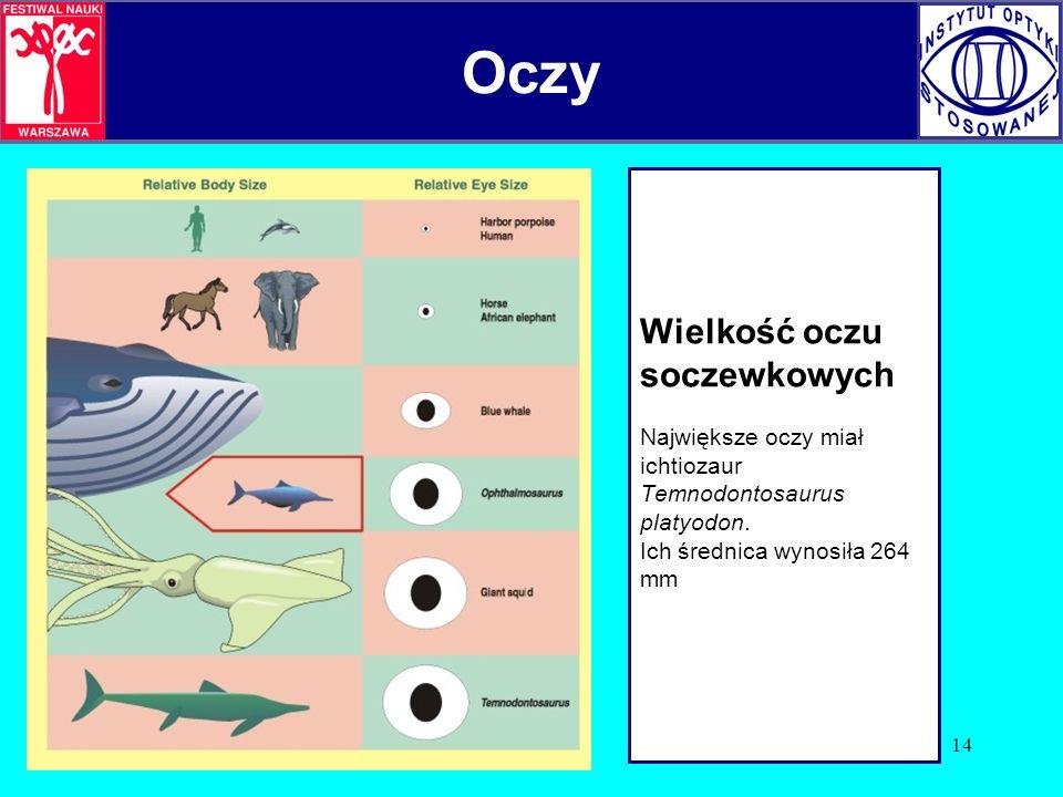 14 Wielkość oczu soczewkowych Największe oczy miał ichtiozaur Temnodontosaurus platyodon. Ich średnica wynosiła 264 mm Oczy