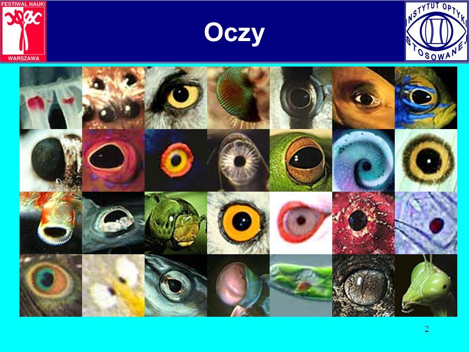 3 Rodzaje oczu Dzielimy je na: fotoreceptory (nie formujące obrazu) i na oczy prawdziwe (formujące obraz).