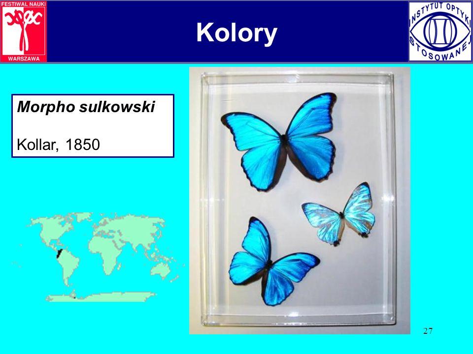 27 Morpho sulkowski Kollar, 1850 Kolory