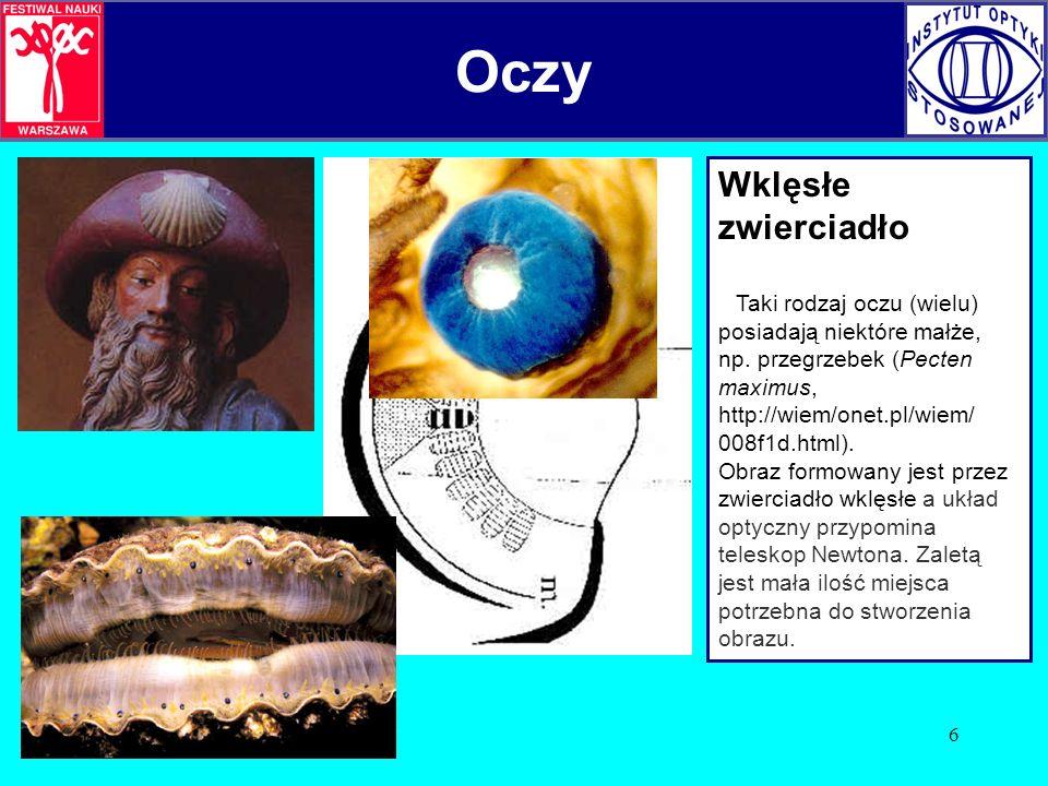 6 Wklęsłe zwierciadło Taki rodzaj oczu (wielu) posiadają niektóre małże, np. przegrzebek (Pecten maximus, http://wiem/onet.pl/wiem/ 008f1d.html). Obra