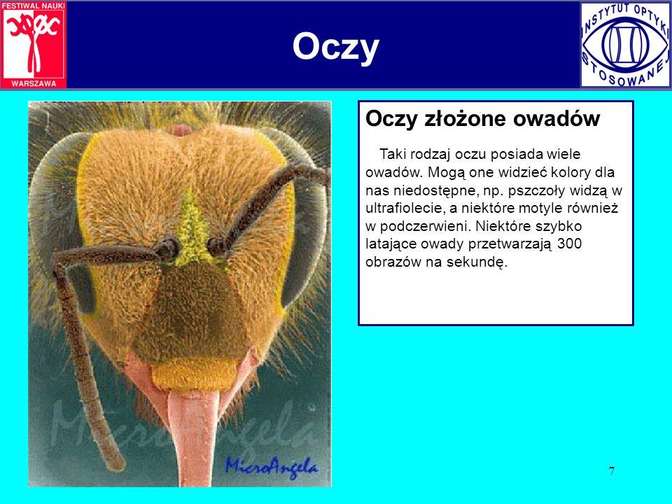 7 Oczy złożone owadów Taki rodzaj oczu posiada wiele owadów. Mogą one widzieć kolory dla nas niedostępne, np. pszczoły widzą w ultrafiolecie, a niektó