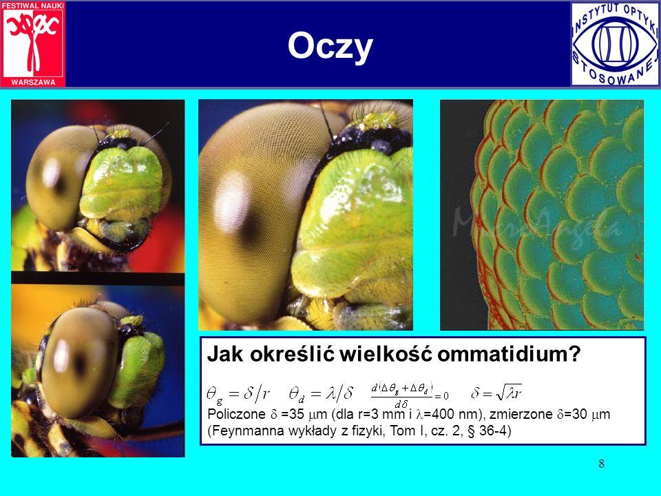 9 Oczy złożone owadów A tak przypuszczalnie wygląda obraz widziany owadzim okiem złożonym. Oczy