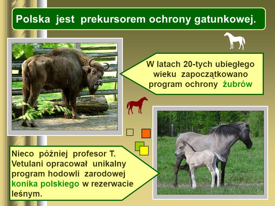 Polska jest prekursorem ochrony gatunkowej. W latach 20-tych ubiegłego wieku zapoczątkowano program ochrony żubrów Nieco później profesor T. Vetulani
