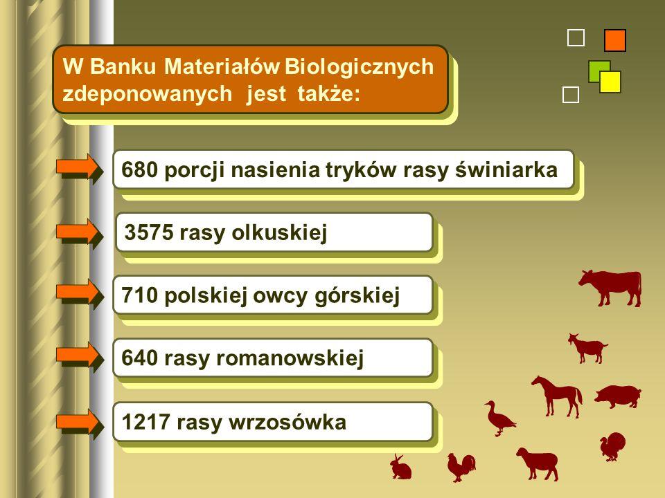 680 porcji nasienia tryków rasy świniarka 3575 rasy olkuskiej 710 polskiej owcy górskiej W Banku Materiałów Biologicznych zdeponowanych jest także: 64