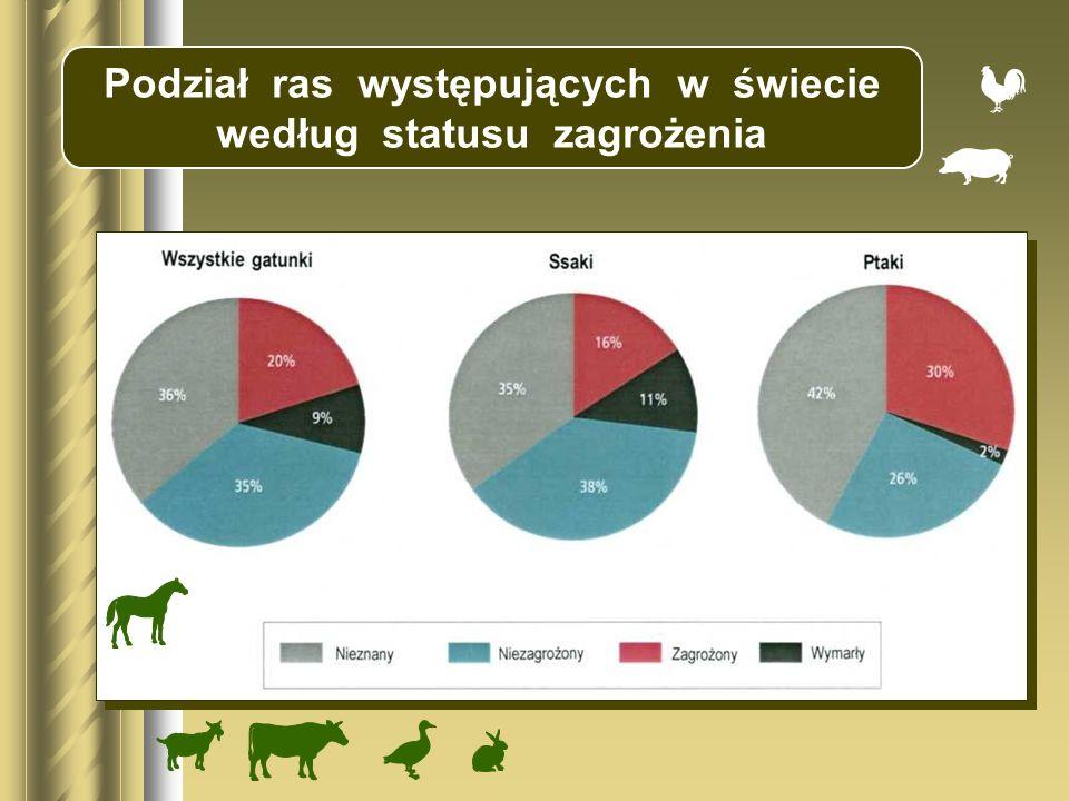 świniarka Corriedale wielkopolskie olkuska cakiel podhalański wrzosówka