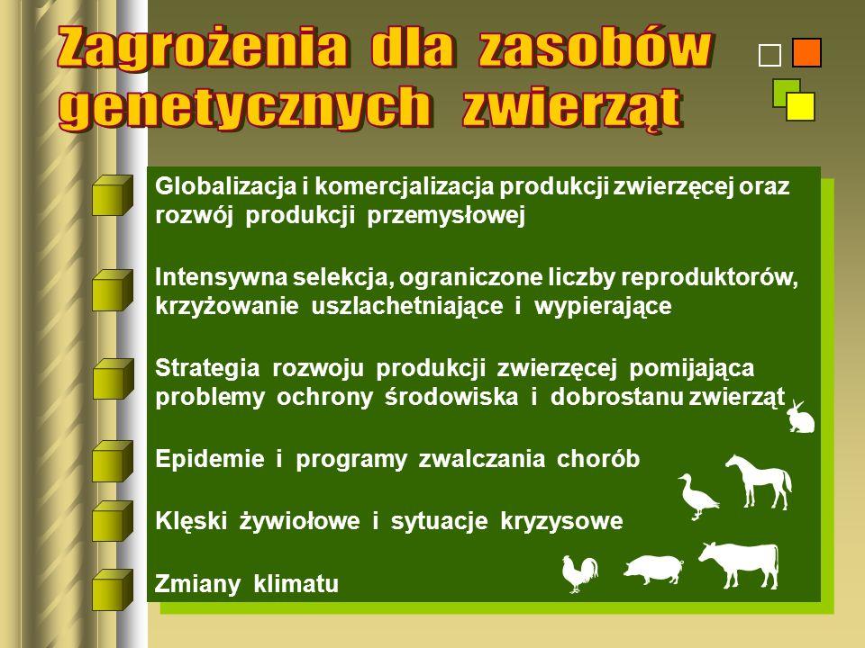 Globalizacja i komercjalizacja produkcji zwierzęcej oraz rozwój produkcji przemysłowej Intensywna selekcja, ograniczone liczby reproduktorów, krzyżowa