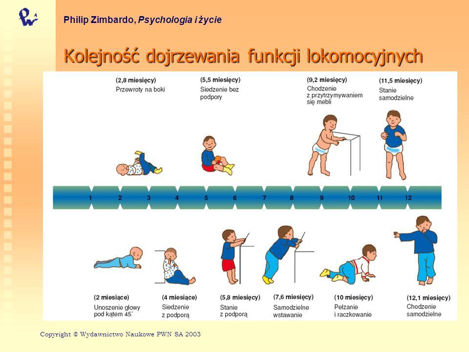 Kolejność dojrzewania funkcji lokomocyjnych Philip Zimbardo, Psychologia i życie Copyright © Wydawnictwo Naukowe PWN SA 2003
