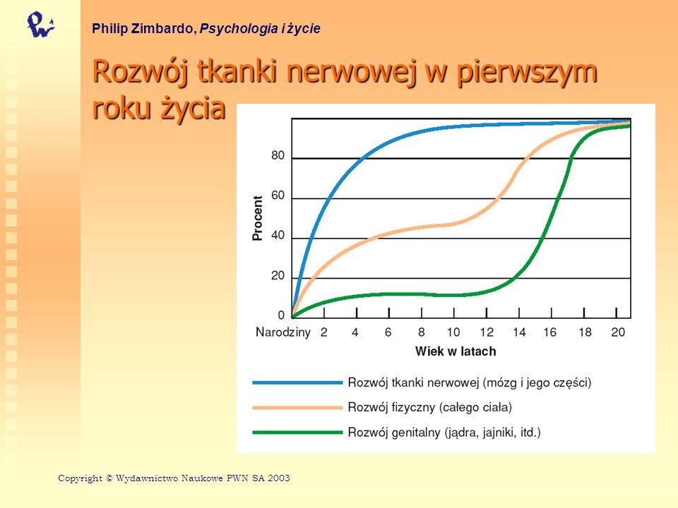 Rozwój tkanki nerwowej w pierwszym roku życia Philip Zimbardo, Psychologia i życie Copyright © Wydawnictwo Naukowe PWN SA 2003