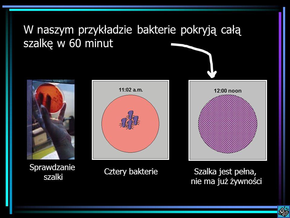 W naszym przykładzie bakterie pokryją całą szalkę w 60 minut Cztery bakterieSzalka jest pełna, nie ma już żywności Sprawdzanie szalki