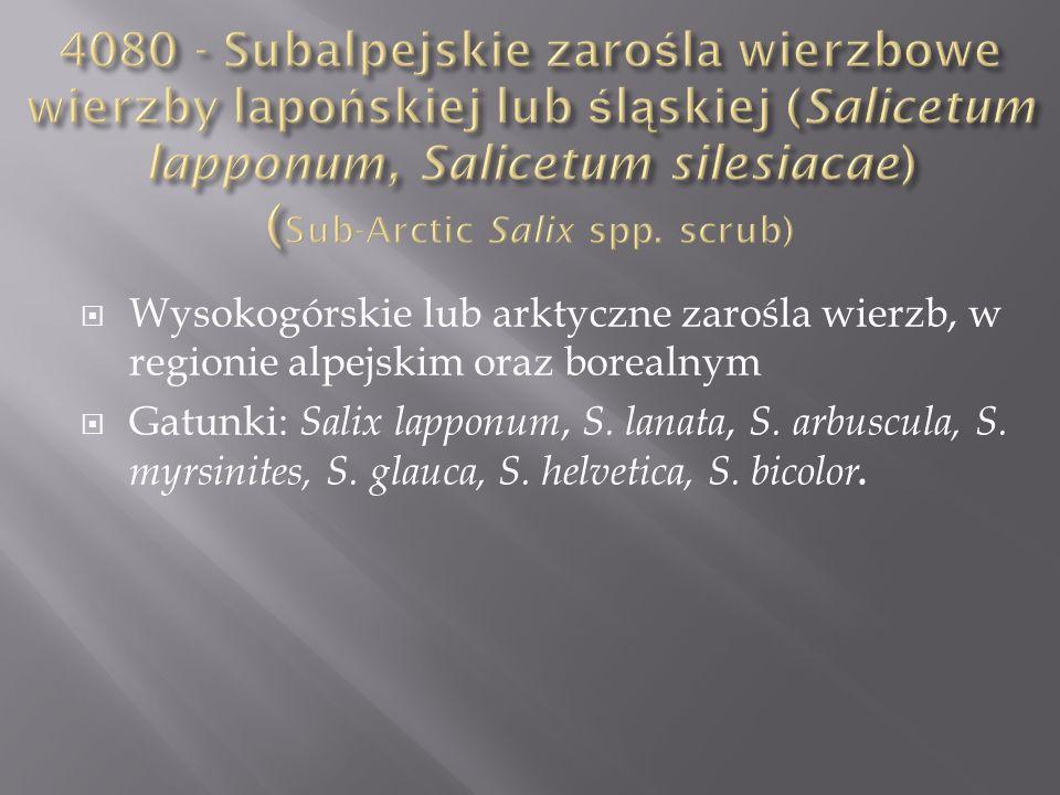 Wysokogórskie lub arktyczne zarośla wierzb, w regionie alpejskim oraz borealnym Gatunki: Salix lapponum, S. lanata, S. arbuscula, S. myrsinites, S. gl