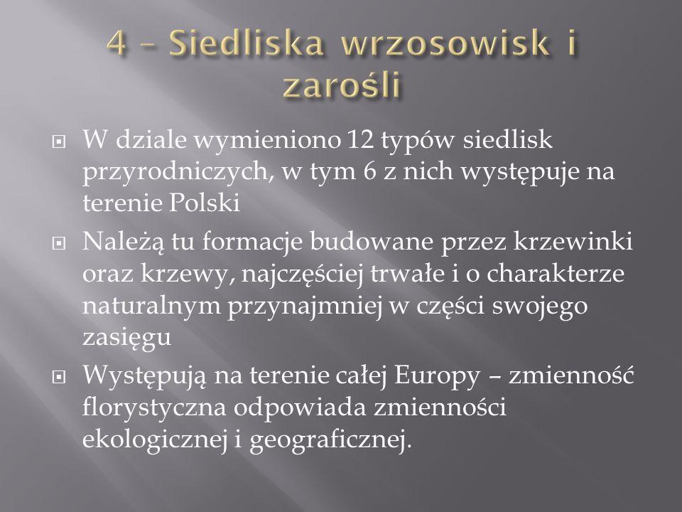 W dziale wymieniono 12 typów siedlisk przyrodniczych, w tym 6 z nich występuje na terenie Polski Należą tu formacje budowane przez krzewinki oraz krzewy, najczęściej trwałe i o charakterze naturalnym przynajmniej w części swojego zasięgu Występują na terenie całej Europy – zmienność florystyczna odpowiada zmienności ekologicznej i geograficznej.