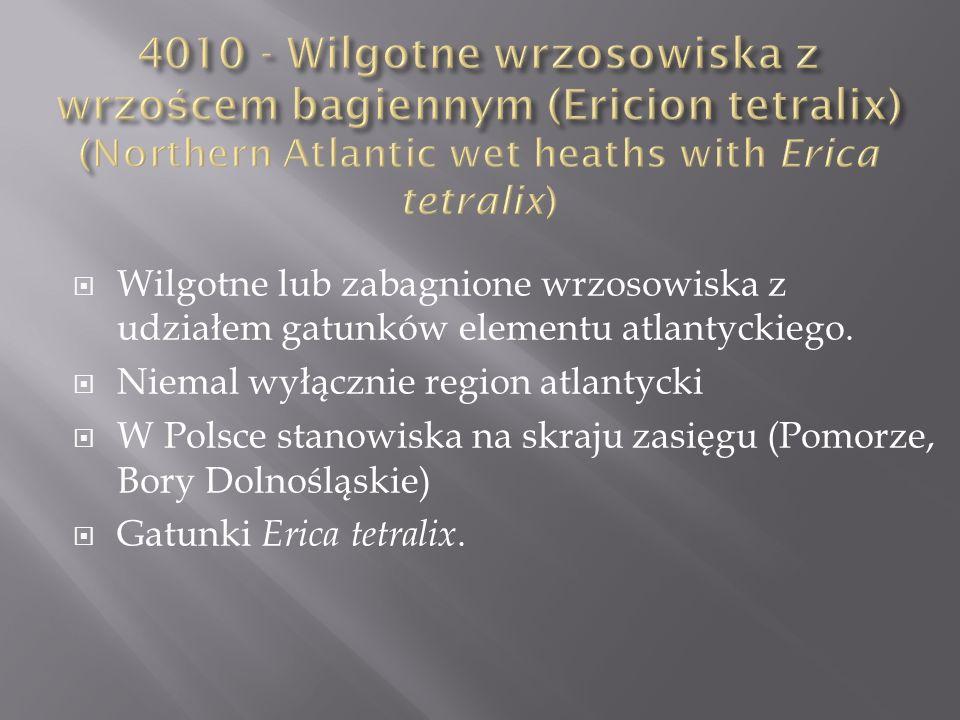 Wilgotne lub zabagnione wrzosowiska z udziałem gatunków elementu atlantyckiego. Niemal wyłącznie region atlantycki W Polsce stanowiska na skraju zasię