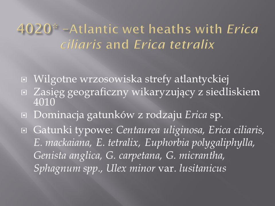 Wilgotne wrzosowiska strefy atlantyckiej Zasięg geograficzny wikaryzujący z siedliskiem 4010 Dominacja gatunków z rodzaju Erica sp. Gatunki typowe: Ce