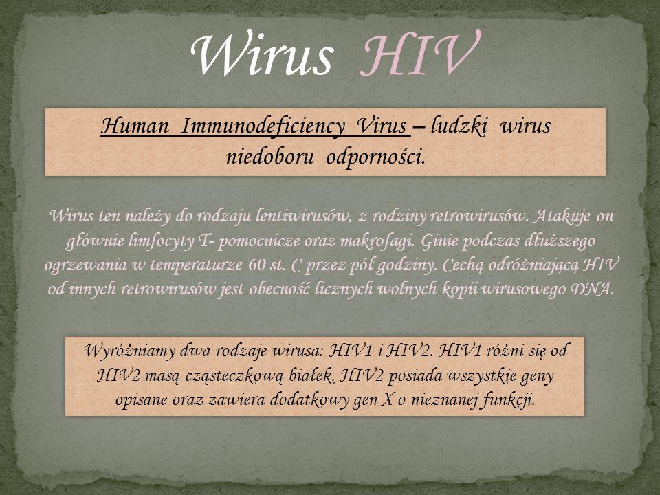 Wirus HIV Human Immunodeficiency Virus – ludzki wirus niedoboru odporności. Wirus ten należy do rodzaju lentiwirusów, z rodziny retrowirusów. Atakuje