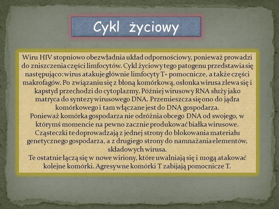 Cykl życiowy Wiru HIV stopniowo obezwładnia układ odpornościowy, ponieważ prowadzi do zniszczenia części limfocytów. Cykl życiowy tego patogenu przeds