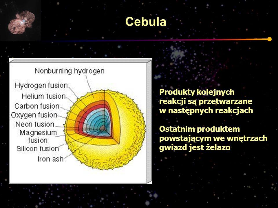 Cebula Produkty kolejnych reakcji są przetwarzane w następnych reakcjach Ostatnim produktem powstającym we wnętrzach gwiazd jest żelazo