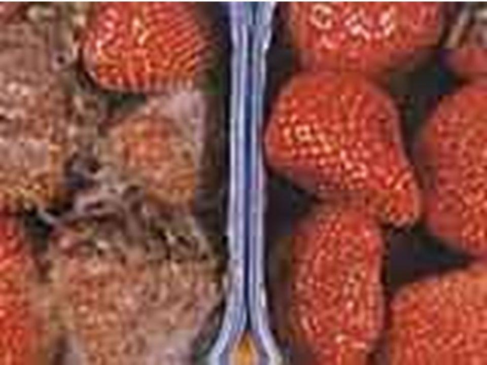 Promieniowanie jonizujące: Zwalcza chorobotwórcze bakterie, pasożyty i pleśnie, Eliminuje drobnoustroje, Zapobiega psuciu się i gniciu, Zapobiega prze