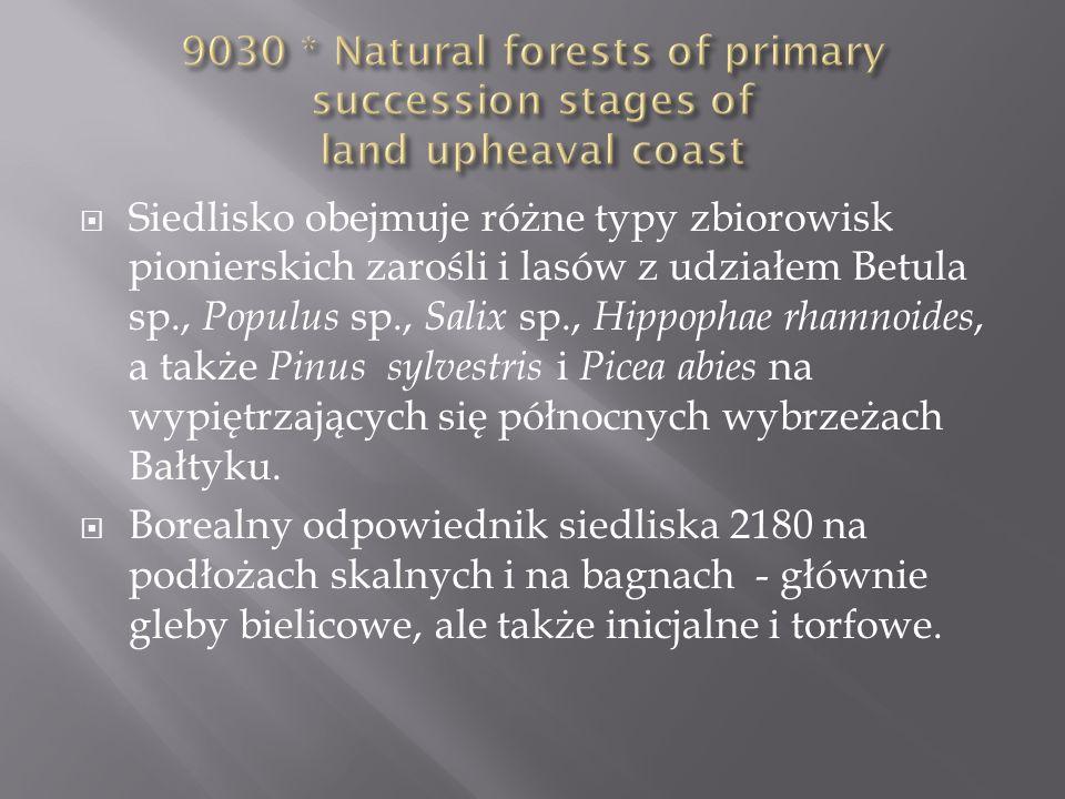 Siedlisko obejmuje różne typy zbiorowisk pionierskich zarośli i lasów z udziałem Betula sp., Populus sp., Salix sp., Hippophae rhamnoides, a także Pin