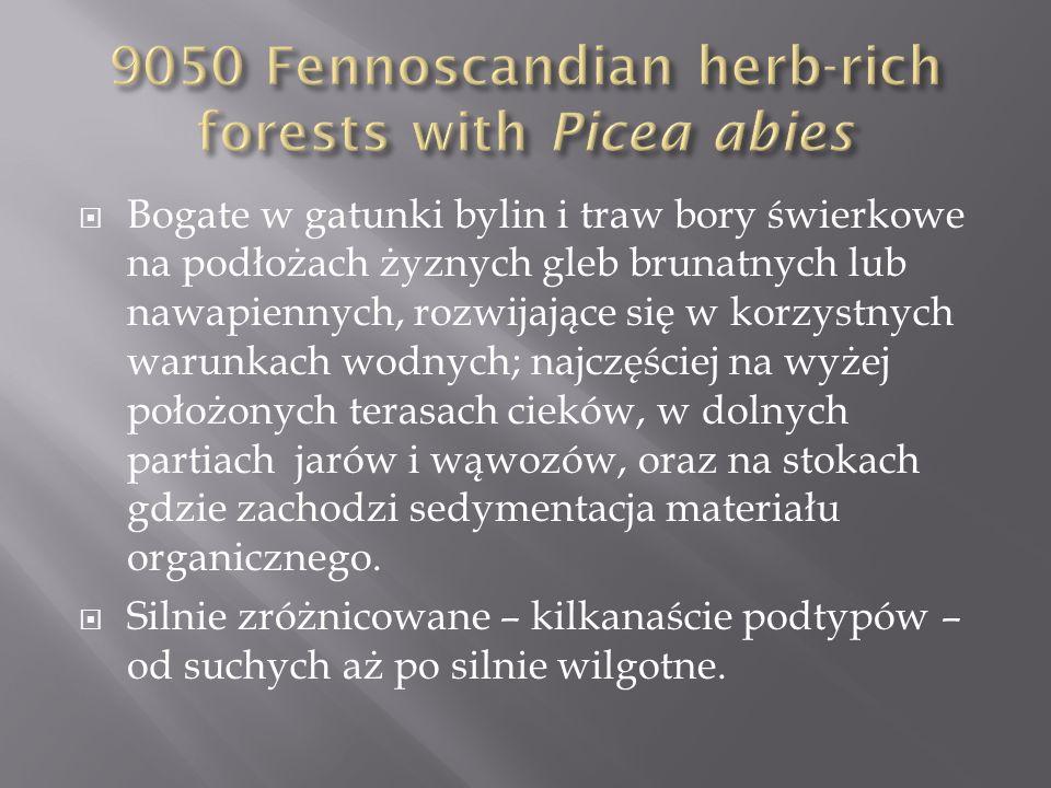 Bogate w gatunki bylin i traw bory świerkowe na podłożach żyznych gleb brunatnych lub nawapiennych, rozwijające się w korzystnych warunkach wodnych; n