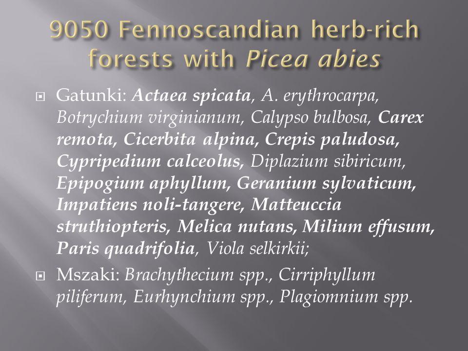 Gatunki: Actaea spicata, A. erythrocarpa, Botrychium virginianum, Calypso bulbosa, Carex remota, Cicerbita alpina, Crepis paludosa, Cypripedium calceo