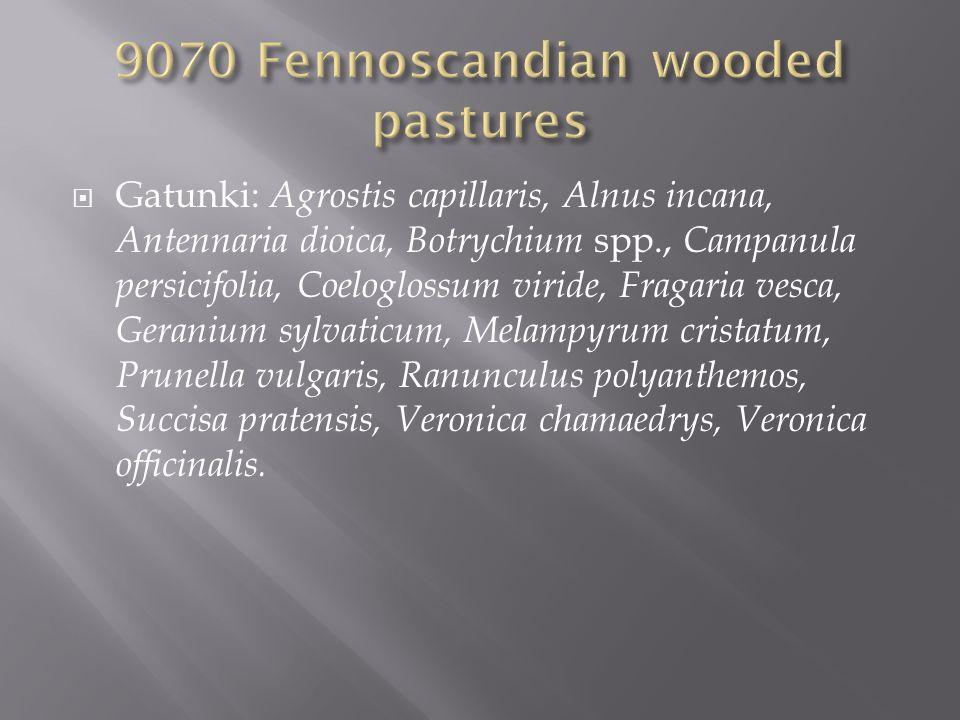 Gatunki: Agrostis capillaris, Alnus incana, Antennaria dioica, Botrychium spp., Campanula persicifolia, Coeloglossum viride, Fragaria vesca, Geranium