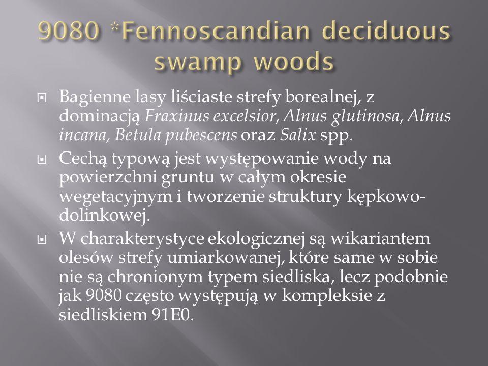 Bagienne lasy liściaste strefy borealnej, z dominacją Fraxinus excelsior, Alnus glutinosa, Alnus incana, Betula pubescens oraz Salix spp. Cechą typową