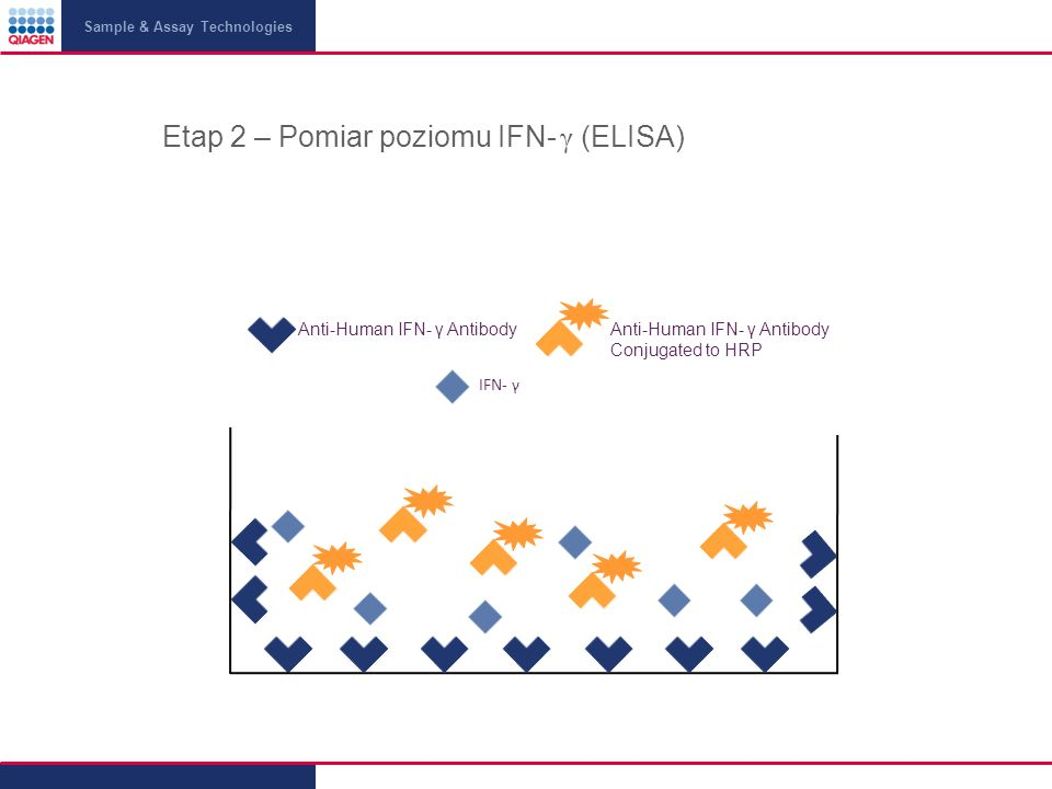 Sample & Assay Technologies Etap 2 – Pomiar poziomu IFN- γ (ELISA) Anti-Human IFN- γ AntibodyAnti-Human IFN- γ Antibody Conjugated to HRP IFN- γ