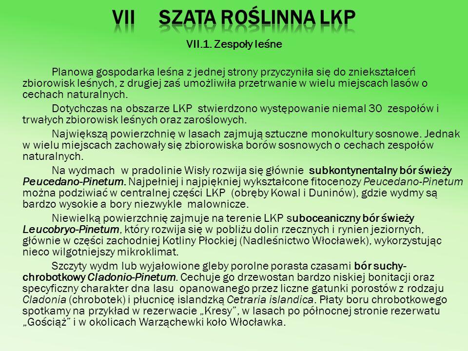 VII.1. Zespoły leśne Planowa gospodarka leśna z jednej strony przyczyniła się do zniekształceń zbiorowisk leśnych, z drugiej zaś umożliwiła przetrwani