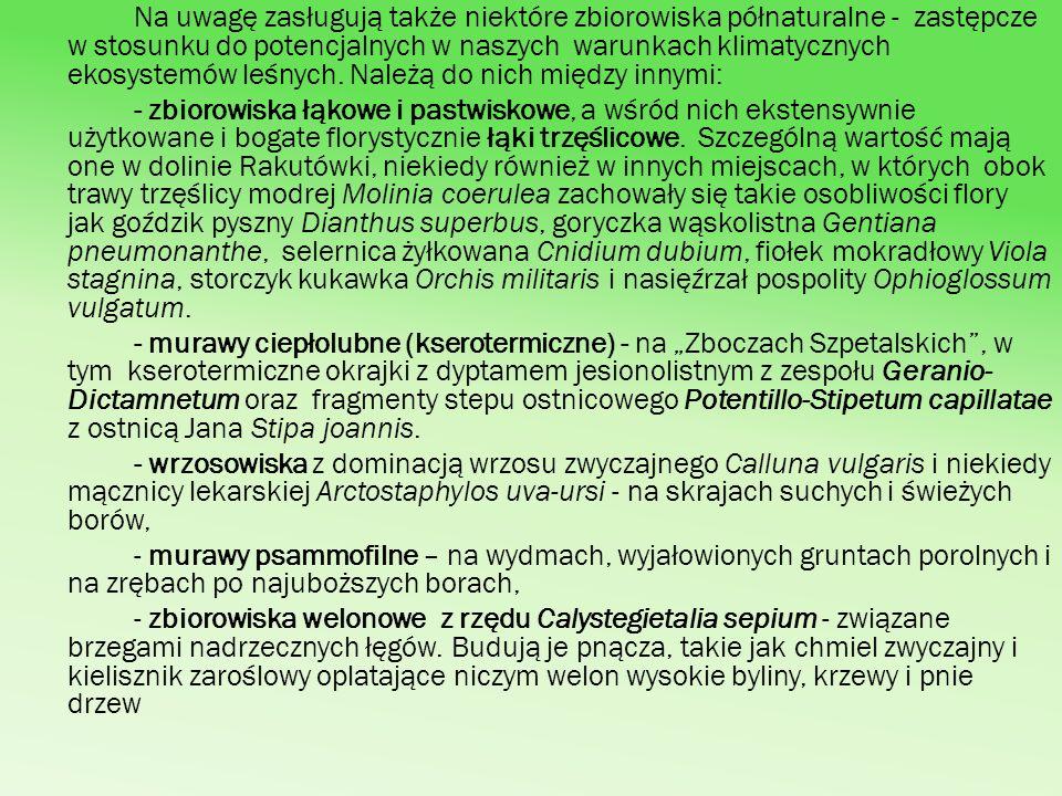 Stosunkowo liczna i przy tym bardzo interesująca jest flora, czyli ogół gatunków roślin w Lasach Gostynińsko-Włocławskich.