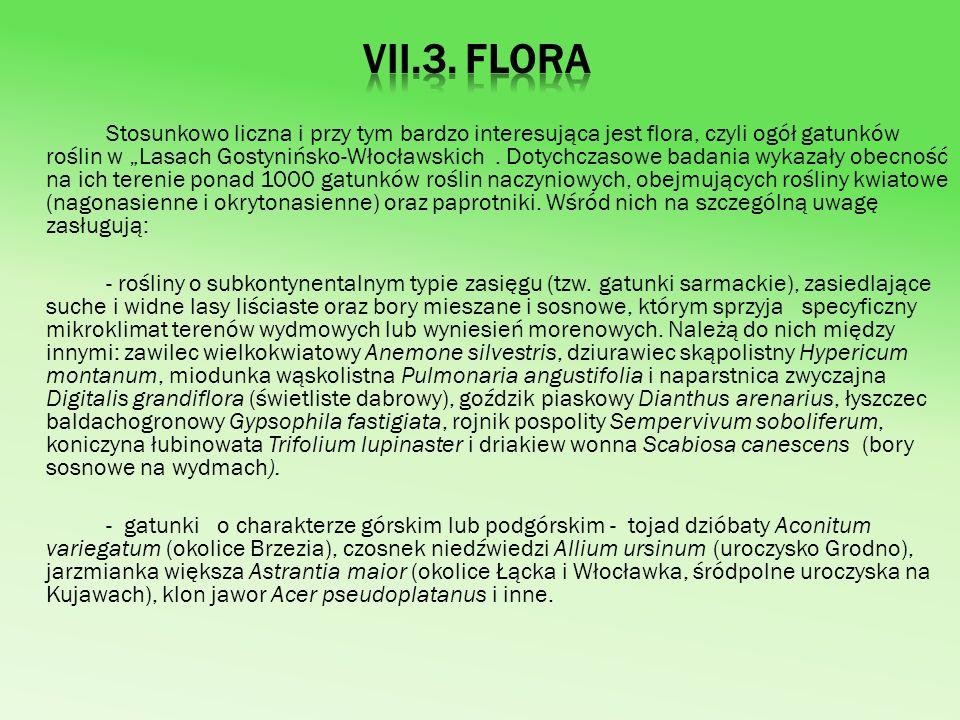- gatunki borealnego rosnące w borach, na łąkach i torfowiskach, wśród nich przeżytki z chłodnych okresów klimatycznych - relikty glacjalne: gwiazdnica grubolistna Stellaria crassifolia, fiołek torfowy Viola epipsila, zimoziół północny Linnaea borealis, widłak wroniec Lycopodium selago oraz mchy - Camptothecium nitens, Thuidium lanatum, Meesia triquetra, Paludella squarrosa i Scorpidium scorpoides - bardzo rzadkie rośliny elementu pontyjskiego, głównie przedstawiciele flory kserotermicznej (ciepłolubnej), związanej z murawami stepowymi lub napiaskowymi (psammofilnymi).