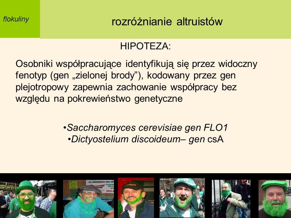 flokuliny HIPOTEZA: Osobniki współpracujące identyfikują się przez widoczny fenotyp (gen zielonej brody), kodowany przez gen plejotropowy zapewnia zac