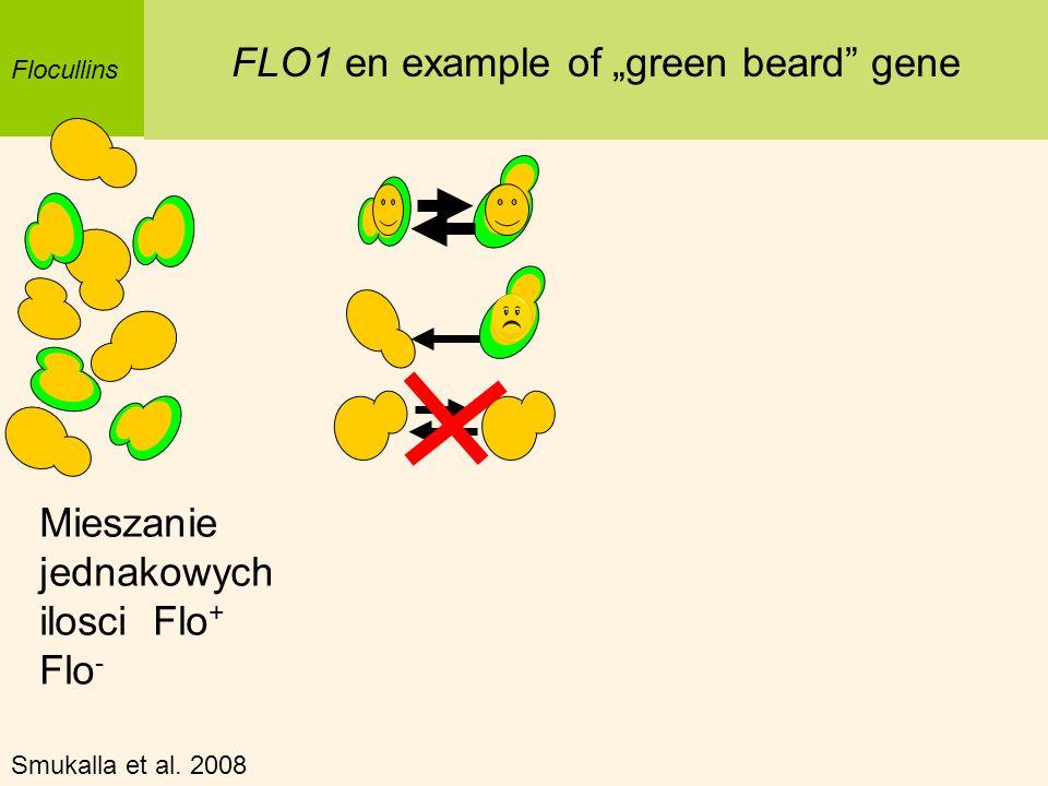 Flocullins FLO1 en example of green beard gene Mieszanie jednakowych ilosci Flo + Flo - Smukalla et al. 2008
