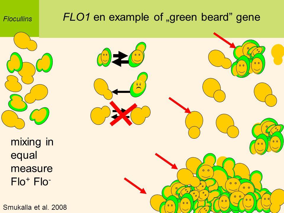 Flocullins FLO1 en example of green beard gene mixing in equal measure Flo + Flo - Smukalla et al. 2008