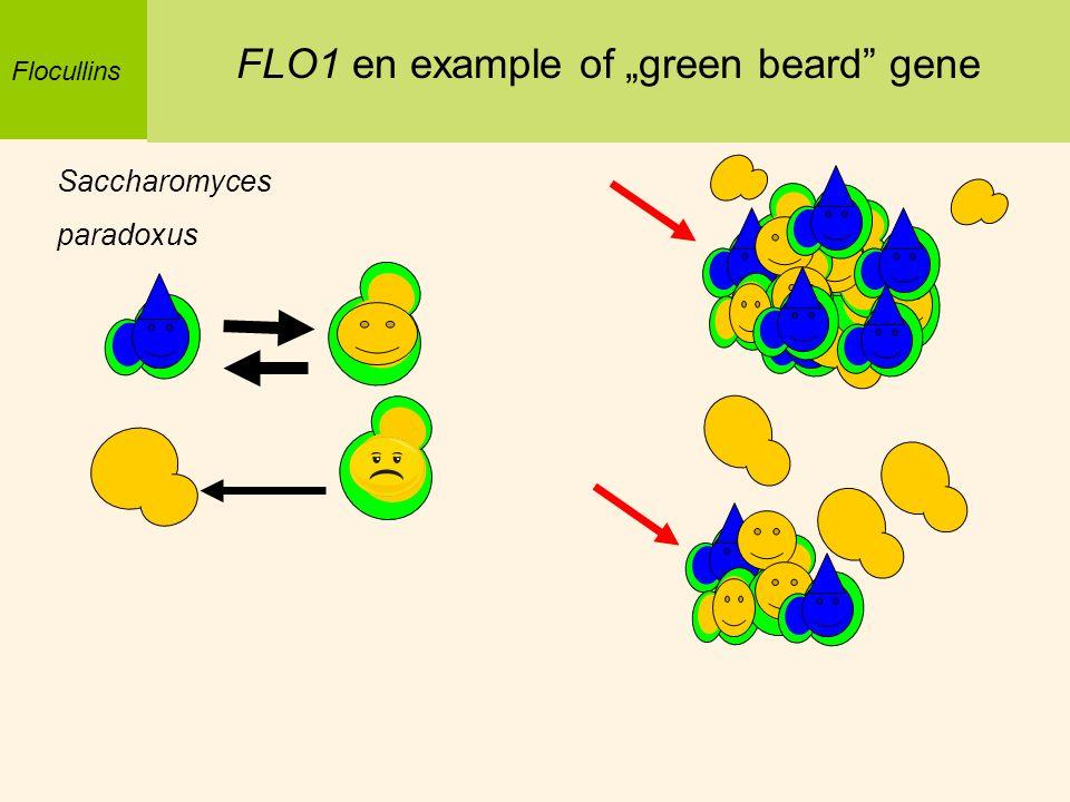 Saccharomyces paradoxus Flocullins FLO1 en example of green beard gene