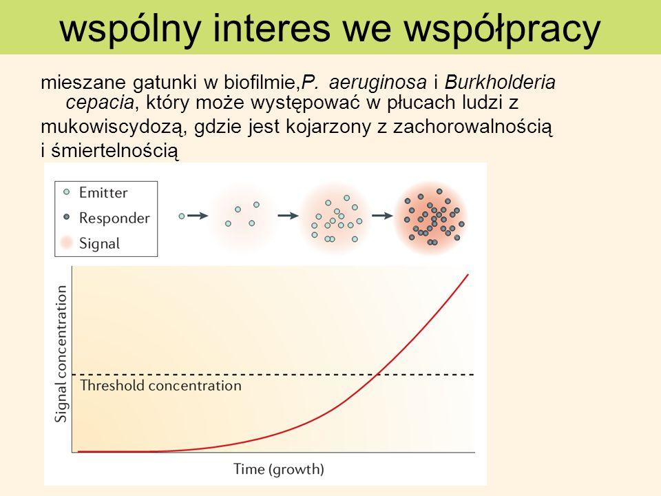 mieszane gatunki w biofilmie,P. aeruginosa i Burkholderia cepacia, który może występować w płucach ludzi z mukowiscydozą, gdzie jest kojarzony z zacho