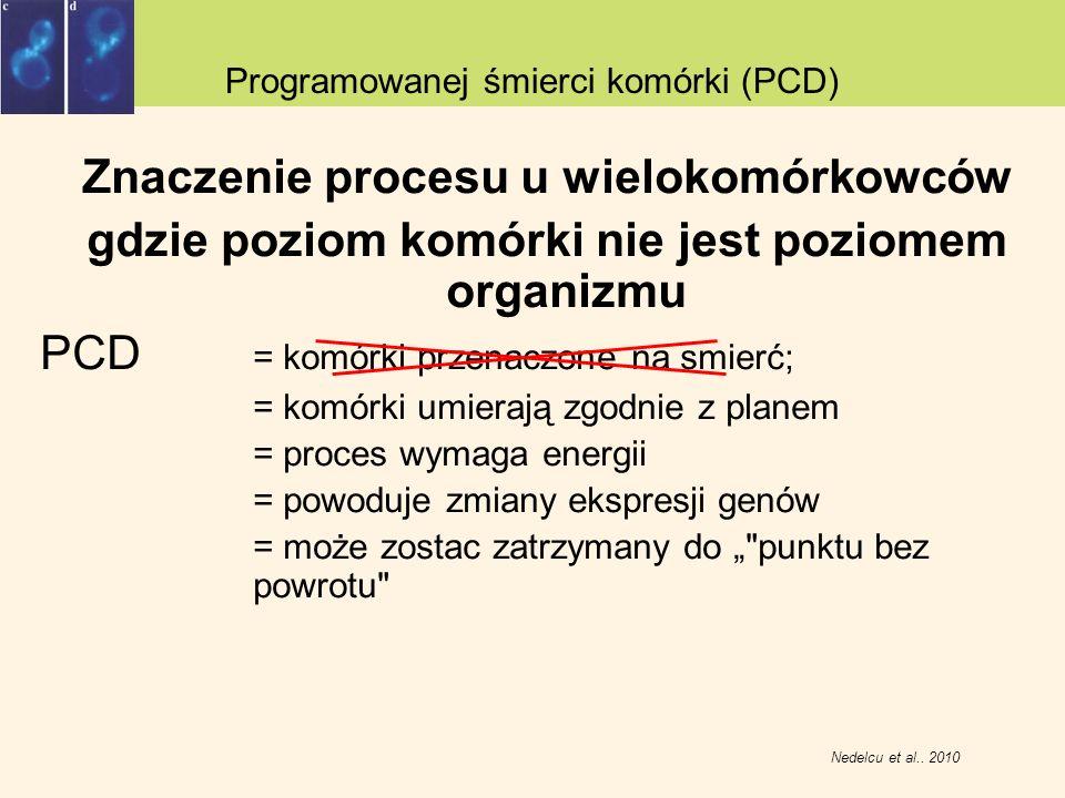 Znaczenie procesu u wielokomórkowców gdzie poziom komórki nie jest poziomem organizmu PCD = komórki przenaczone na smierć; = komórki umierają zgodnie