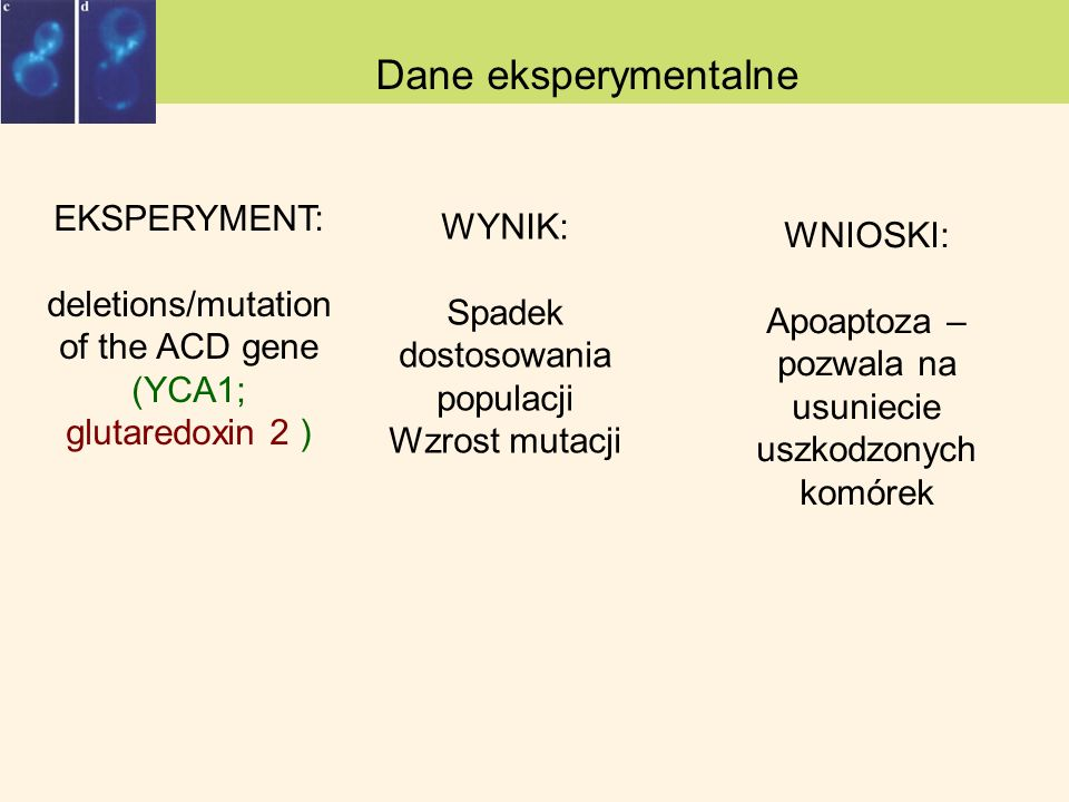 Why to die? Dane eksperymentalne EKSPERYMENT: deletions/mutation of the ACD gene (YCA1; glutaredoxin 2 ) WYNIK: Spadek dostosowania populacji Wzrost m
