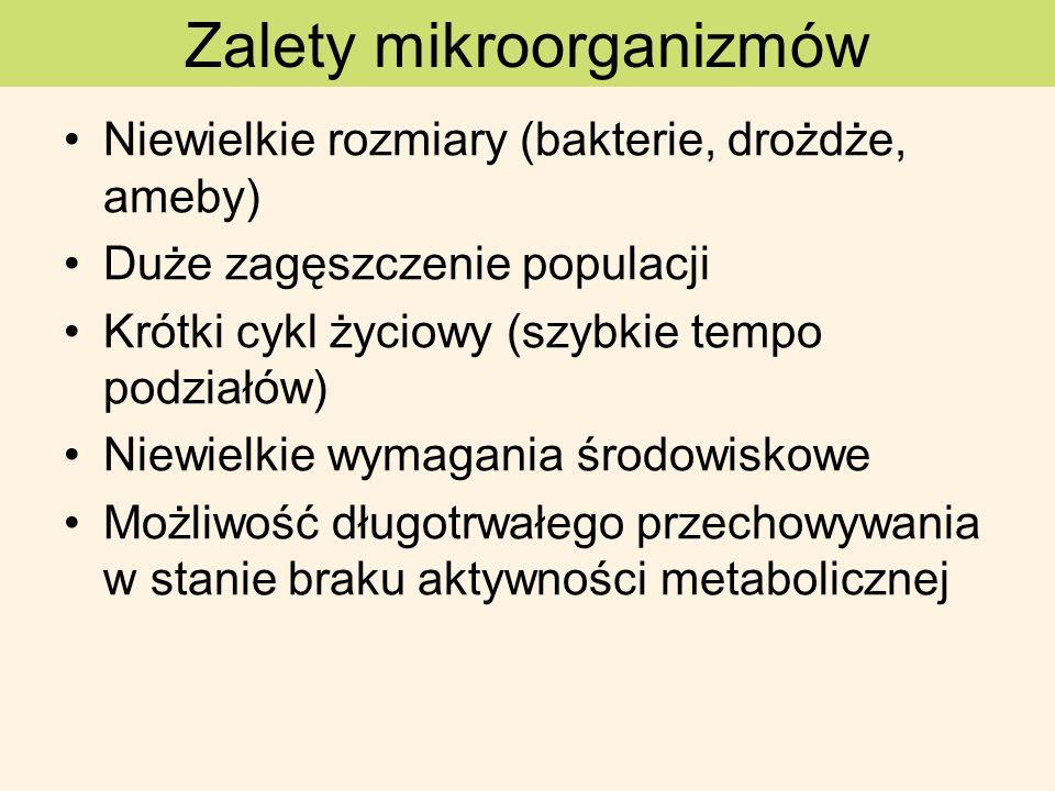 Zalety mikroorganizmów Niewielkie rozmiary (bakterie, drożdże, ameby) Duże zagęszczenie populacji Krótki cykl życiowy (szybkie tempo podziałów) Niewie