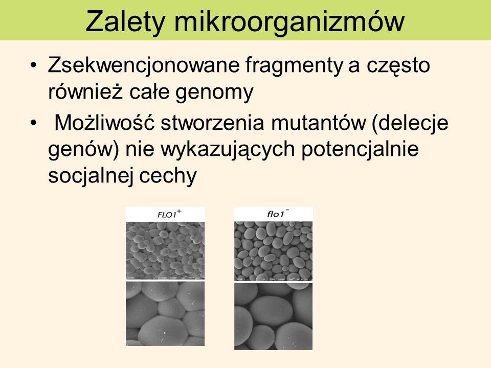 Saccharomyces cerevisiae - gen suc2 (inwertaza) zewnątrzkomórkowa hydroliza sacharozy pozwala innym komórkom na korzysanie z glukozy i fruktozy Koschwanez et al.