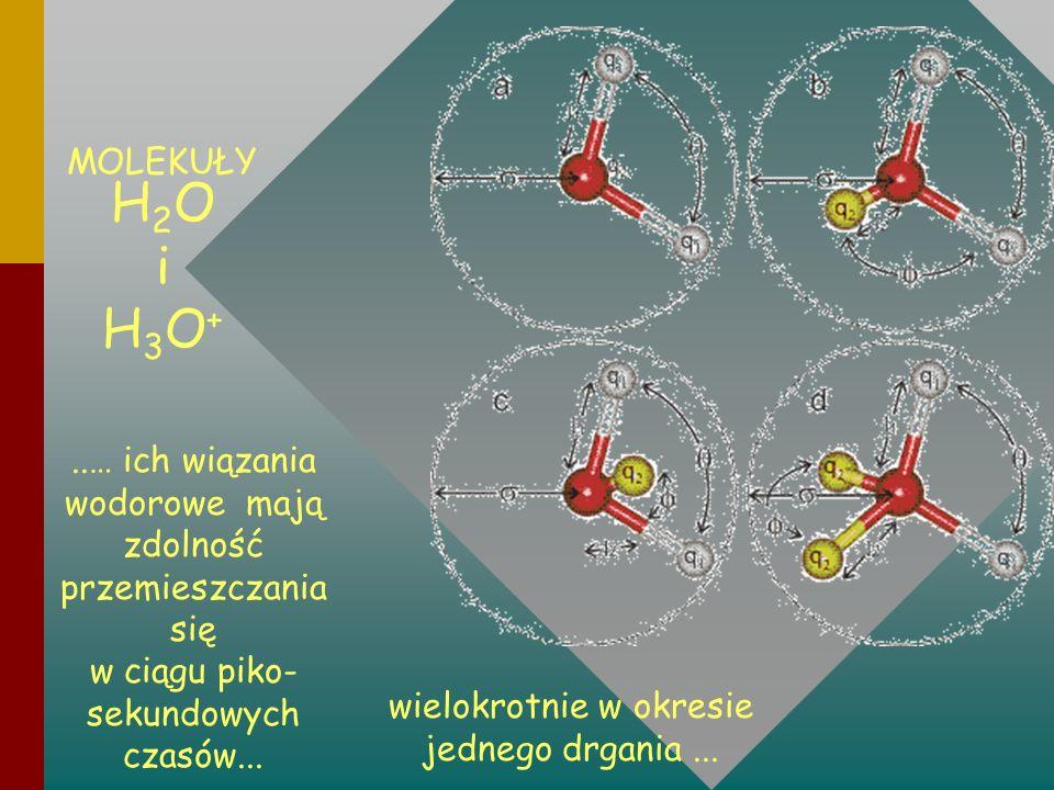 ..… ich wiązania wodorowe mają zdolność przemieszczania się w ciągu piko- sekundowych czasów... MOLEKUŁY H 2 O i H 3 O + wielokrotnie w okresie jedneg