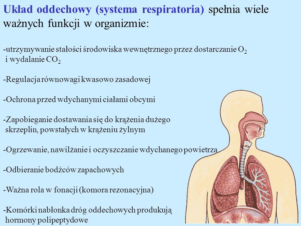 Układ oddechowy (systema respiratoria) spełnia wiele ważnych funkcji w organizmie: -utrzymywanie stałości środowiska wewnętrznego przez dostarczanie O
