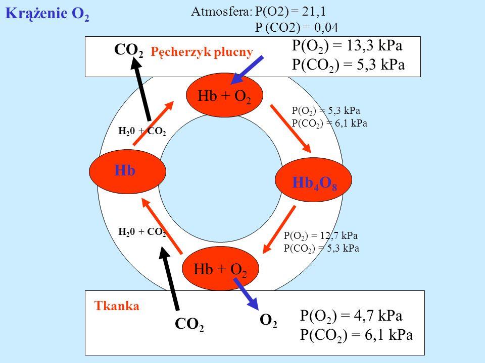 Pęcherzyk płucny Tkanka Hb + O 2 O2O2 CO 2 Hb Hb 4 O 8 H 2 0 + CO 2 P(O 2 ) = 4,7 kPa P(CO 2 ) = 6,1 kPa P(O 2 ) = 13,3 kPa P(CO 2 ) = 5,3 kPa Atmosfe