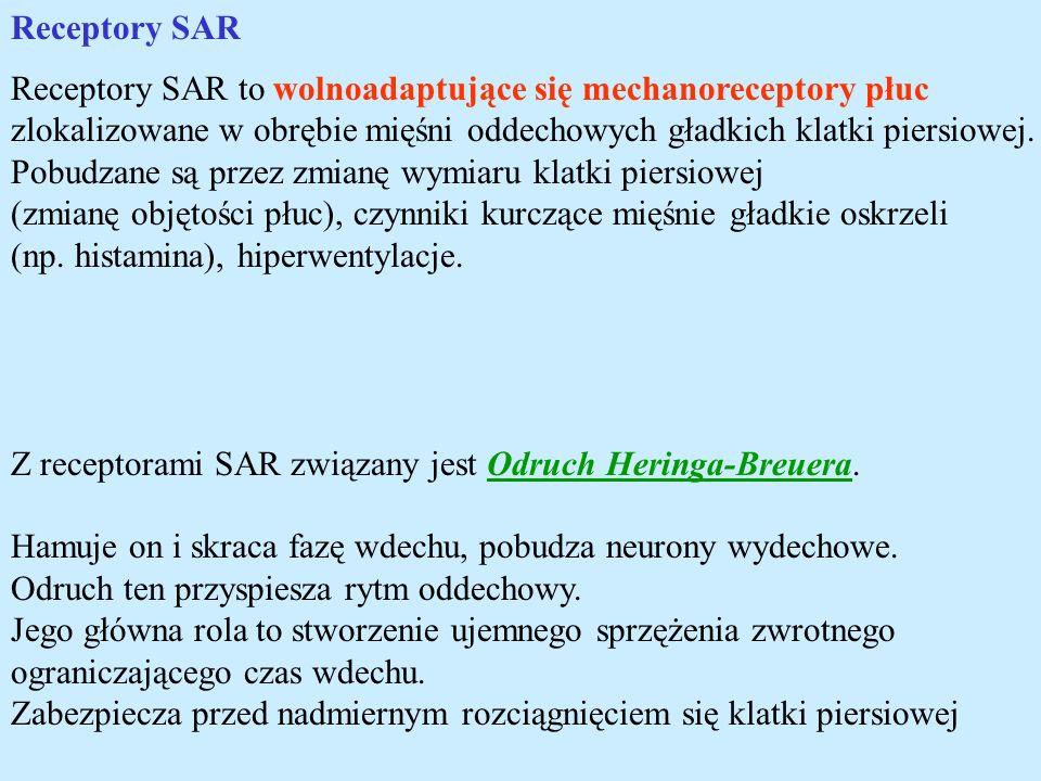 Receptory SAR Receptory SAR to wolnoadaptujące się mechanoreceptory płuc zlokalizowane w obrębie mięśni oddechowych gładkich klatki piersiowej. Pobudz