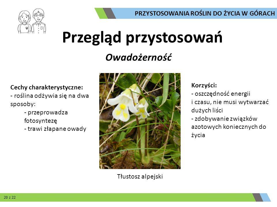 Owadożerność Cechy charakterystyczne: - roślina odżywia się na dwa sposoby: - przeprowadza fotosyntezę - trawi złapane owady Korzyści: - oszczędność e
