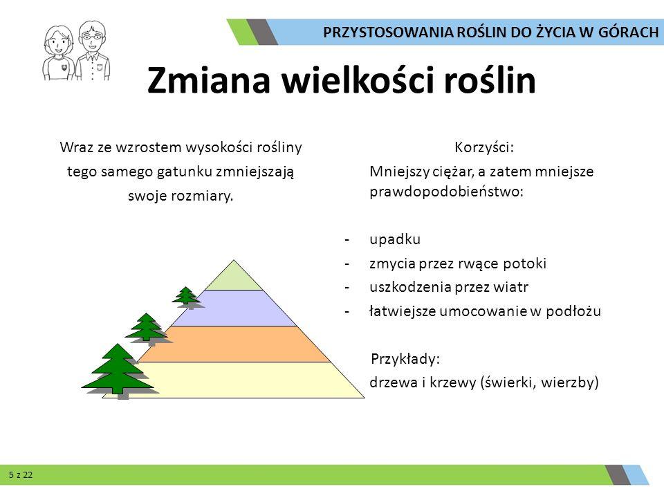 Gruboszowatość Rojnik górski Cechy charakterystyczne: - występowanie tkanki wodne j Korzyści: - odporność na suszę Przegląd przystosowań PRZYSTOSOWANIA ROŚLIN DO ŻYCIA W GÓRACH 18 z 22