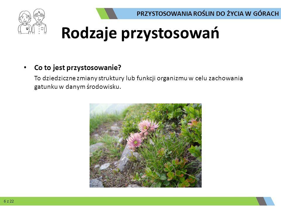 Formy wzrostu: krzewinki szpalerowe Cechy charakterystyczne: - pędy ściśle przylegają do podłoża - pędy tworzą gęstą plątaninę - niski wzrost Korzyści: - korzystanie z ciepła zgromadzonego w podłożu - łatwiejsze wchłanianie wody - odporność na wiatr PRZYSTOSOWANIA ROŚLIN DO ŻYCIA W GÓRACH 7 z 22 Przegląd przystosowań
