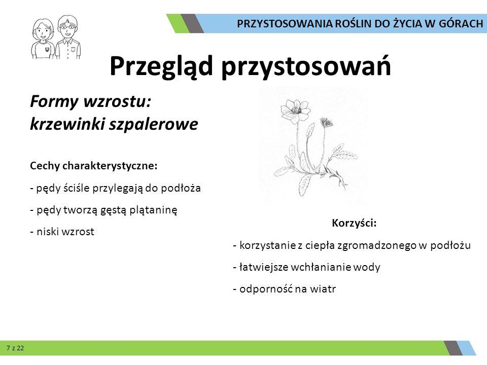 Owadożerność Cechy charakterystyczne: - roślina odżywia się na dwa sposoby: - przeprowadza fotosyntezę - trawi złapane owady Korzyści: - oszczędność energii i czasu, nie musi wytwarzać dużych liści - zdobywanie związków azotowych koniecznych do życia Tłustosz alpejski Przegląd przystosowań PRZYSTOSOWANIA ROŚLIN DO ŻYCIA W GÓRACH 20 z 22